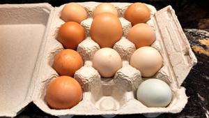 farm-eggs300x169